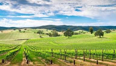 'Ancestor' vines in Barossa Valley, Australia