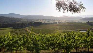 De Bortoli Wines Yarra Valley Vineyard