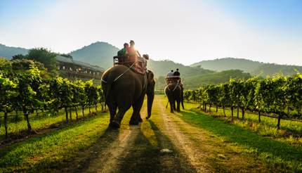 Tourists riding an elephant in Thailand