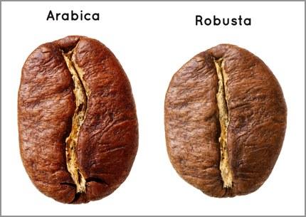 Arabica versus Robusta