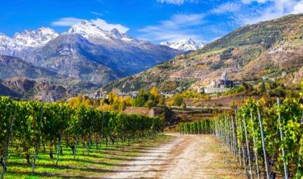 A vineyard in Valle d'Aosta