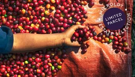 Achibo Yayu Wild Forest Coffee