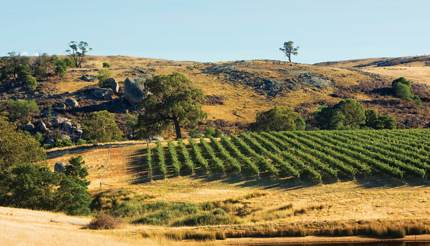 Fowles Wine's vineyards among the rocky outcrops of the Strathbogie Ranges
