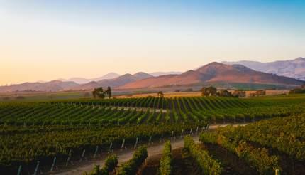 A vineyard in Santa Ynez, California
